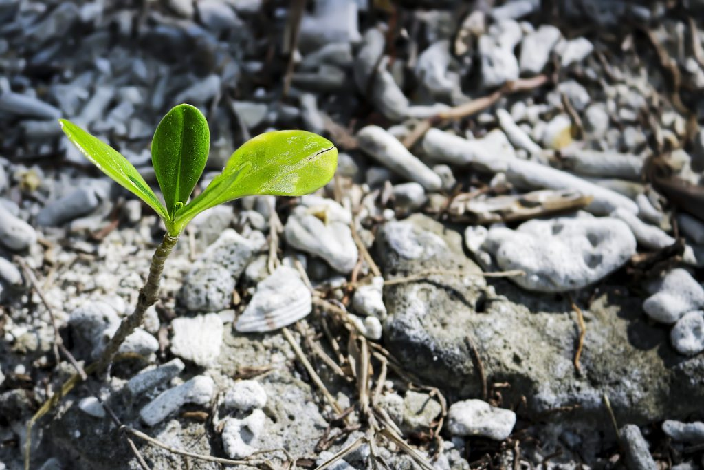 Image of green plant budding from soil and rocks